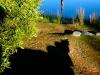 peace-garden-10